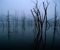 GreySwamps