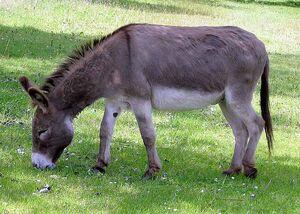 Donkey 1 arp 750px