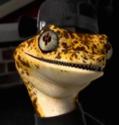 Mondo Gecko 2012 portrait