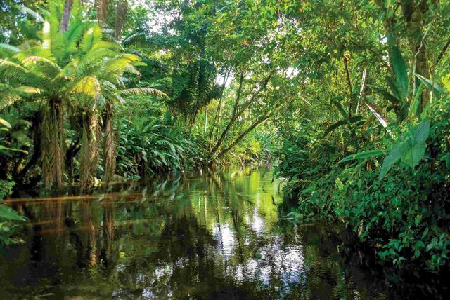 File:Xecuador-amazon-jungle-river.jpg.pagespeed.ic.8xfWSnL0dR.jpg