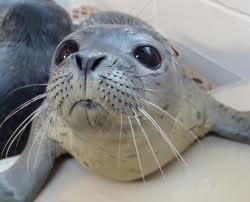 File:Seal 2.jpg