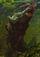 Zygopteras