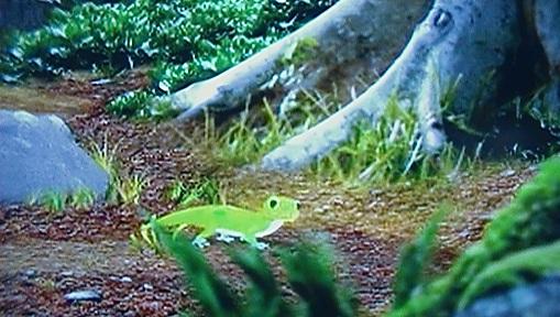 File:Geckoinforest.jpg
