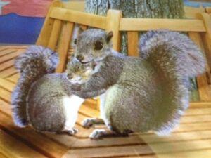 Save The Squirrel Wonder Pets Wiki Fandom Powered By Wikia