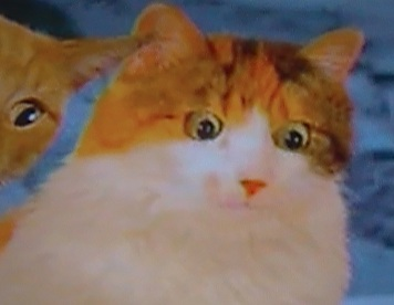 File:Catmom.jpg