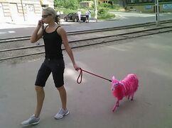Pink Goat 2