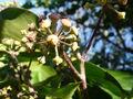 Ivy Bloss.JPG