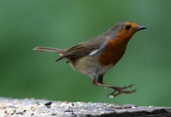 Birds.2010 1533