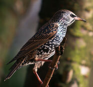Birds.2010.1679