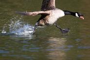 Birds.2010 611