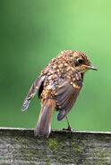 Birds.2011 1848
