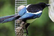 Birds.2010 1482