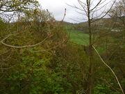 Woodland near aireyholme farm