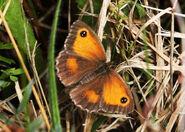 Butterflies 081