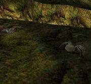 Sewer Spider