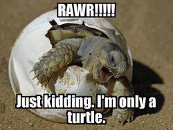 Rawr turtle