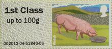2012-04-24 Pigs 5 1st