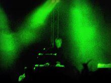 Foxx Marghera green