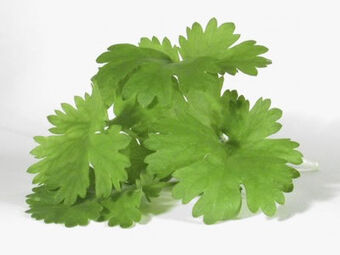 What-is-cilantro-1-1-