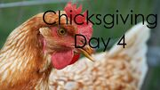 ChicksgivingDay4