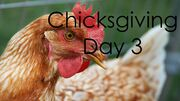 ChicksgivingDay3