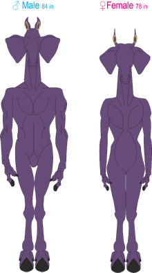 Allosoph Anatomy