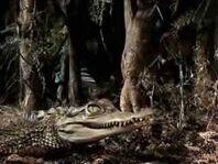 Alligator attacks Alan