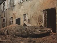Alligator house 5