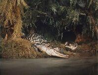 Giant alligator river bank