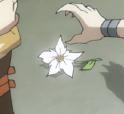 685px-Tygra cheetara flower 2