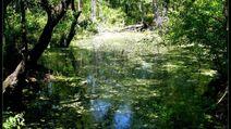 Spring Swamp - 2