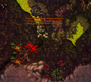An Interest In Botany Quest Plant 1