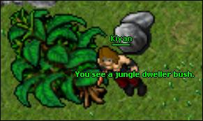 Jesteraddon bush