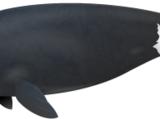 Grönlandwal