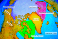 Grönlandwal Verbreitung