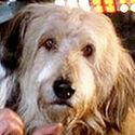 Einstein (dog)2