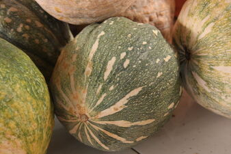 Cucurbita maxima-Pumpkin-Lakeru-Pumpkins2-Luke Simmons