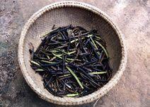Vigna radiata-Mungbean-Fore mungu-Mungbean harvest-Luke Simmons