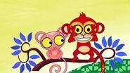 Images monkey bushbay big eyes