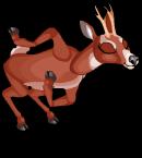 Roe deer an