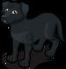 Labrador Retriever single