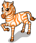 Orange zebra single