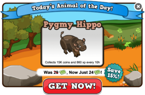 Pygmy hippo of the day modal