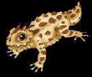 Horned lizard static