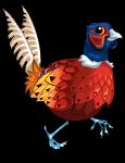 Pheasant an