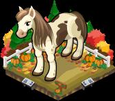 Pumpkin patch pony single
