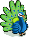 Peacock single