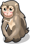 Barbary Macaque single