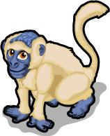 Vervet Monkey single