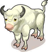 Albino Bison single